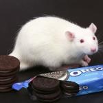 Oreo crazy rats hooked like cocaine addicts, claims unpublished study