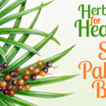 Herbs For Health – Saw Palmetto Berry