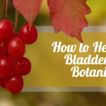 How to Heal Your Bladder with Botanicals