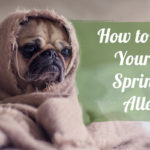 How to Relieve Your Pet's Springtime Allergies