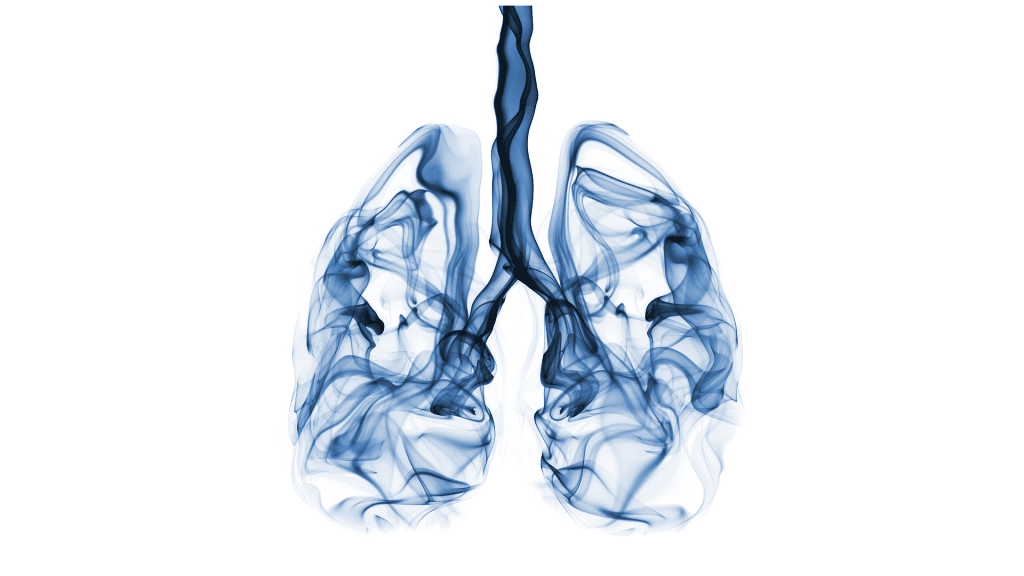 image of lungs, respiratory system